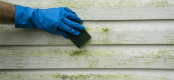 Protect Your Siding by Removing and Preventing Algae and Mildew